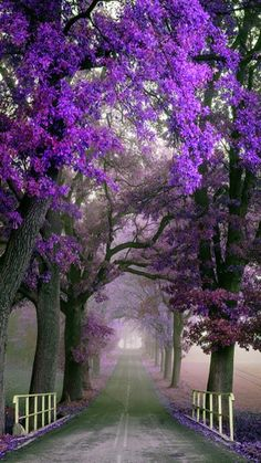 Outdoors Discover Nature Landscape wallpaper by PerfumeVanilla - - Free on ZEDGE Beautiful Nature Wallpaper Beautiful Landscapes Beautiful Gardens Beautiful Flowers Flowers Nature Nature Pictures Beautiful Pictures Beautiful Places Landscape Photography Beautiful Nature Wallpaper, Beautiful Landscapes, Beautiful Gardens, Beautiful Images, Beautiful Flowers, Landscape Photography, Nature Photography, Scenic Photography, Photo Background Images