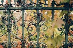 autumn, berries, curlicues, entwined, fence, gate
