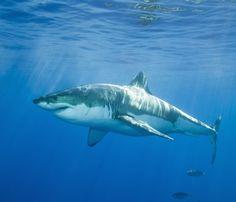 photos of aquatic animals