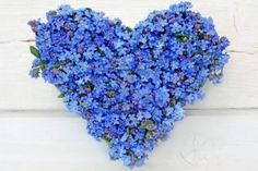 heart made of forget-me-not flowers on white wooden background
