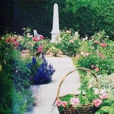 Happy Easter. Mark Hamptons rose garden in the Hamptons HG 1986. #easter #beautiful #classic #roses #garden #inspiration #markhampton @alexahamptoninc #michaeldevineltd #design