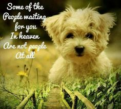 Some of the people waiting for you in heaven are not people at all... #doglove