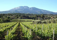 tenutapapale #nerellomascalese #etna #belpasso #catania #sicily #sicilia #italy #italia #wine #vino #rosso #red #rossoetna #redetna #etnared #italianwine #redwine #chardonnay #rosato #italianwine #wines #winebar #wineglass #ilovewine #goodwine #winenight #drink #enoteca #etc #etnarosso #chardonnay