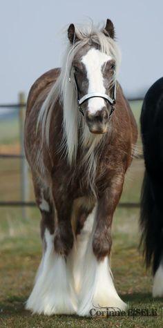 ce cheval resenble a savane