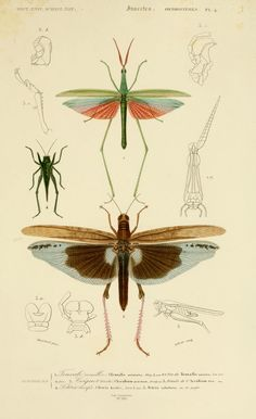 Tip: free printable, an digital book with vintage animal/insect posters. You can save every page as .jpg