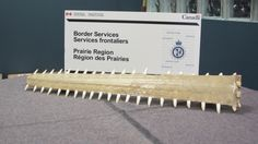 Canada Border Services seized this freshwater sawfish rostrum from a man returning to Saskatchewan from Australia on May International Airport, Fresh Water, Teeth, Pancakes, Canada, Australia, News, Tooth, Pancake