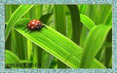 An old digital ladybug I made for good luck... once upon a time.