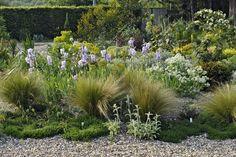 Peter Janke designed gardens. Drought tolerant iris, nassella, stachys in gravel. Love the way the path merges right with the garden.