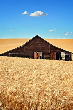 The story takes place in and around Pendleton Oregon where wheat fields like this abound. Country Barns, Country Life, Country Roads, Pendleton Oregon, Red Barns, Old Farm, Old Buildings, Rustic Barn, Old Houses