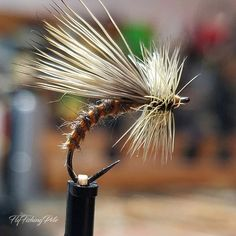 FrankenFly | Where fly tying comes to life!