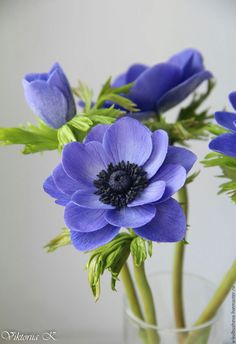 blue flower wallpaper Wallpaper Flowers Blue Nature Ideas For 2019 Botanical Flowers, Exotic Flowers, Amazing Flowers, Purple Flowers, Spring Flowers, Beautiful Flowers, Yellow Roses, Pink Roses, Anemone Flower