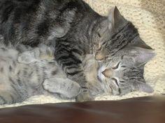 Cleo & Ceazar - love !