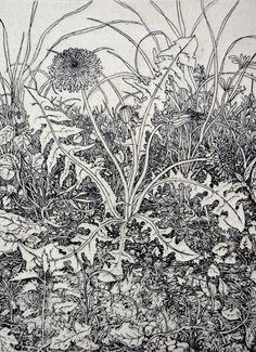 Limited edition gravure Pissenlit par Tricia par tricianewell
