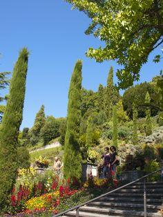 Zypressen auf der Insel Mainau am Bodensee