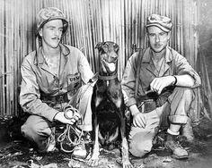 MARINES WAR DOG WWII PHOTO ANDY JUNGLE TRAINED MACHINE GUN NEST USMC WW2 #20930