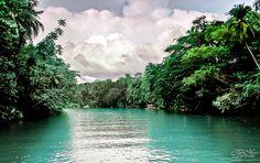 Floating along Loboc River, Bohol |
