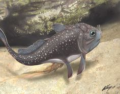 Materpiscis attenboroughi • Live Birth in the Devonian Period: Placoderm Fish from the Gogo Area of north-west Western Australia