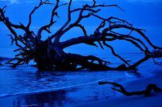 Driftwood Beach just before dawn