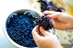 Ponieważ taki syrop z owoców czarnego bzu jest banalnie prosty w przygotowaniu. Poznaj przepis