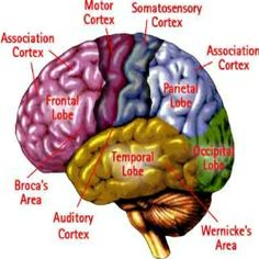 Over the counter medicine for memory loss image 9