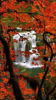 Leaves changing colors with waterfall in background