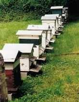 Apiculture - C'est décidé, je serai apiculteur...