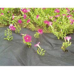 Textília Garden m, netkaná, 50 g/m, čierna Ms Gs, 50th, Herbs, Gardening, Lawn And Garden, Herb, Horticulture, Medicinal Plants