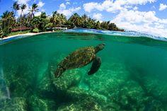 MANA HAWAII PHOTO GALLERY    Mana Photo Hawaii | The Photography of Jeff Mana Walthall