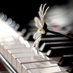 """touchn2btouched: """"Words make you think. Music makes you feel. A song makes you feel a thought."""" _YIP HARBURG"""