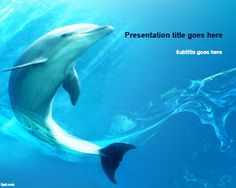 Free Seaworld PowerPoint template is a nice dolphin slide design under the sea for presentations on Sea World and sea animals