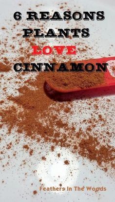 Use cinnamon in your garden as a fungicide, to prevent dampening off disease in your seedlings, and more! | Feathers in the Woods