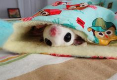 Maysilee- 7 adorable photos of gliders