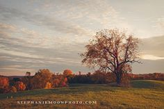 Fine Art Landscape Photography Tree Photography by stephaniemoon, $28.00