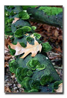 Fungus (III) by  WimKok, via Flickr