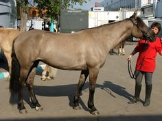 Bashkir horse. Аn ancient breed developed in the mountain/steppe zone near the Volga and the Urals in the former USSR. They are probably related to the Steppe horses of Western Asia.