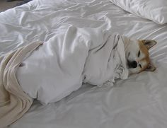 Too cold to get out of bed...