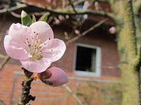 <3 Spring <3