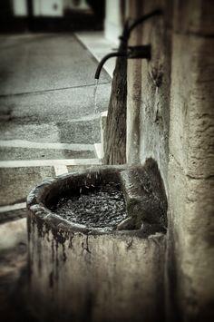 Pasquetta 2012 - La fontana, photo by Stefano