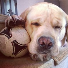 Making sure the ball doesn't go away while napping on the stairs