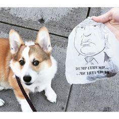 Join the movement! These are poopbags for people who have strong feelings about Donald Trump, and would enjoy pushing his face into dog poop. 15 bags per roll. These limited edition bags Funny Dog Memes, Funny Dogs, Cute Dogs, Strong Feelings, Donald Trump, Corgi, Join, Face, People