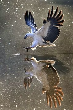 this image shows movement because the background of the photo is blued to show that the animal was moving when the picture was taken.the reflection of the water makes it seem like there are two animals in the picture.
