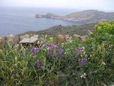 Amazing view with wild flowers Wild Flowers, Island, Mountains, Landscape, Amazing, Water, Travel, Outdoor, Gripe Water