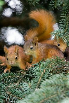 **Baby Squirrel Play..Does this remind you of Nanaland ???