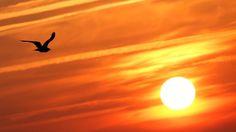 Uma gaivota voa em frente ao sol, depois de um dia quente de verão em Andernos, na França.
