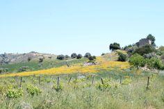 Spring in Sicily