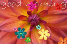 Animated Flowers and Butterflies | good morning gif animated ... butterfly flower send email for friends ...