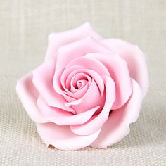 Chantilly Rose - Pink