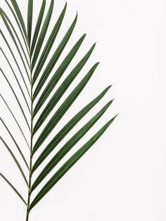 Pause for Harmony is a collaboration between Japanese fashion house Issey Miyake and Finnish glassware company Iittala. The collection comprises sim. Plants Are Friends, Nature Plants, Leaf Art, Tropical Leaves, Green Plants, Botanical Prints, Watercolor Illustration, Wallpaper S, Flower Power