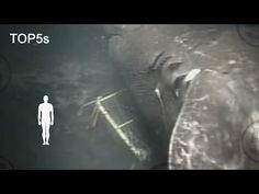 5 Most Mysterious & Unexplained Sea Creatures - YouTube