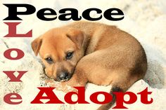 Peace, Love, Adopt Do you love dogs? Us too. #adoptdontshop #adoptdog